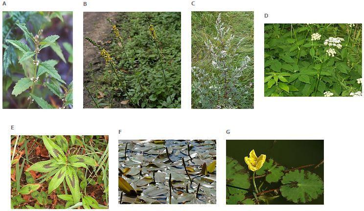 Les plantes du Canal