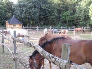accueil-rando-equestre-paddock